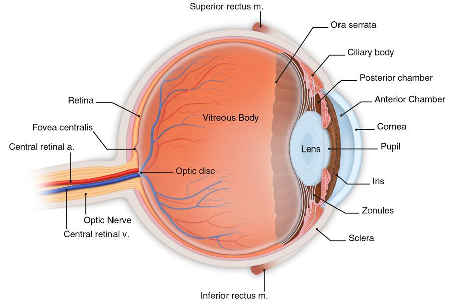vitaminok látástermékekhez